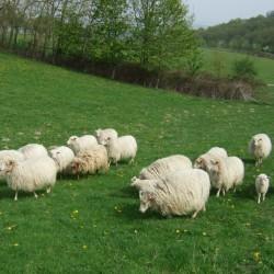Viel Wolle