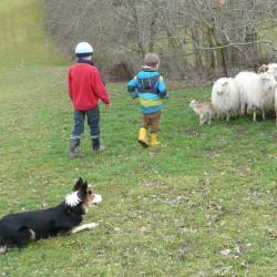 Amy hält die Schafe in Schach