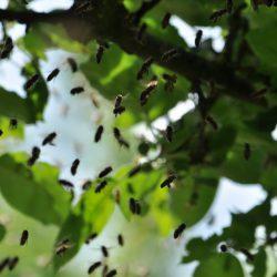 Die Bienen fliegen von unten zu ihrer Königin