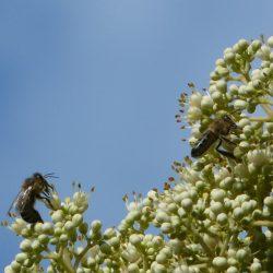 Besucher am Bienenbaum, der die Attraktion für die Bienen ist